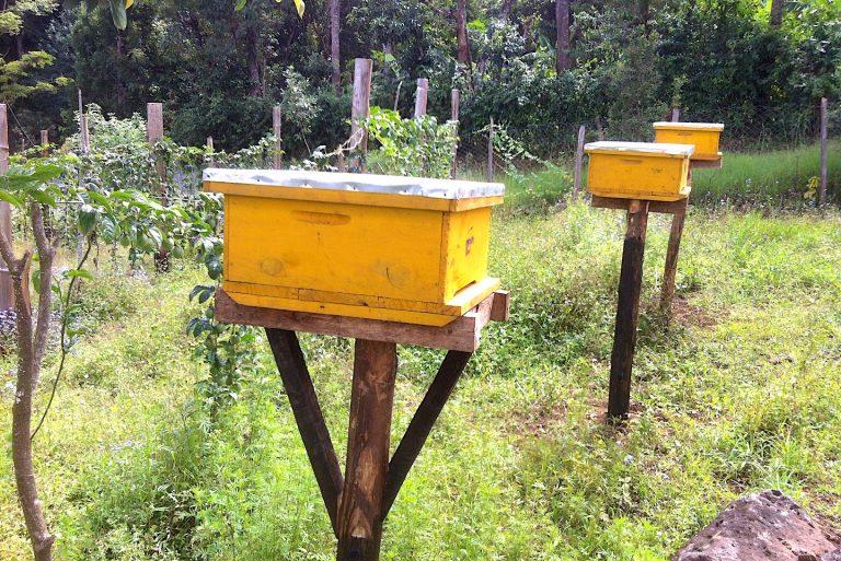 Mbahefarm_beehives_honey